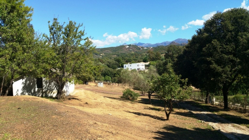 Vente terrain Eccica-suarella 130 000€ - Photo 5