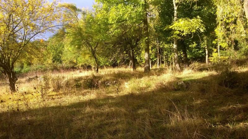 Vente terrain Brives charensac 37800€ - Photo 1