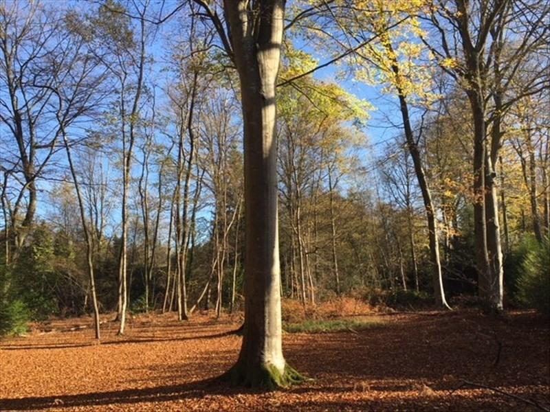 Vente terrain St gatien des bois 165000€ - Photo 2