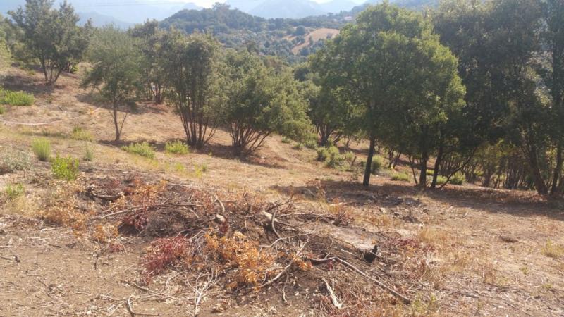 Vente terrain Eccica-suarella 135000€ - Photo 3