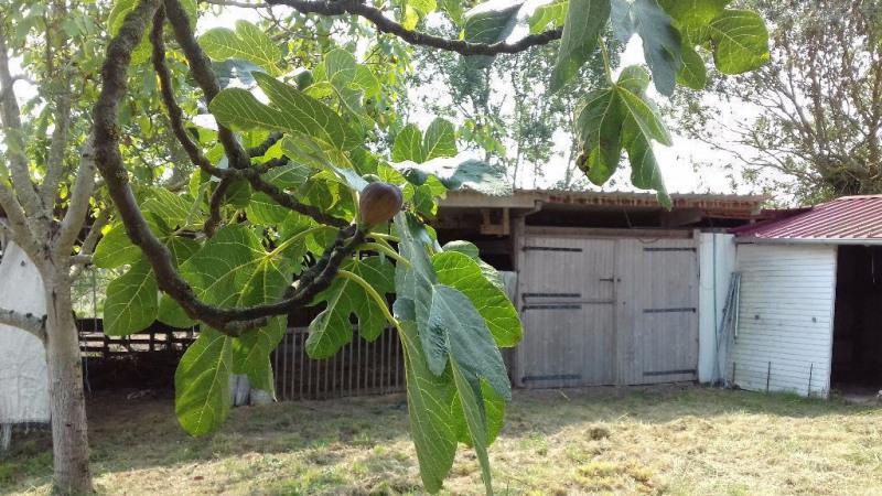 Vente maison / villa St lys 259000€ - Photo 6