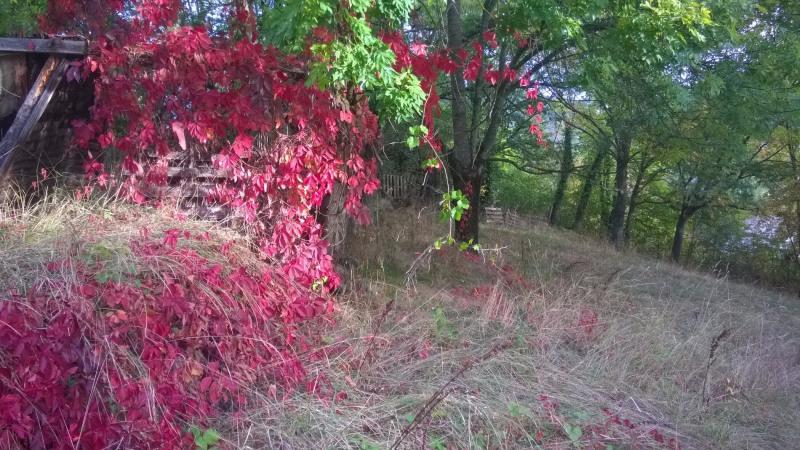 Vente terrain Brives charensac 37800€ - Photo 8