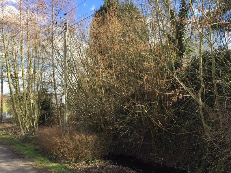 Vendita terreno Drachenbronn birlenbach 50400€ - Fotografia 1