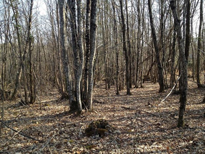 Vente terrain La chapelle gonaguet 28000€ - Photo 3