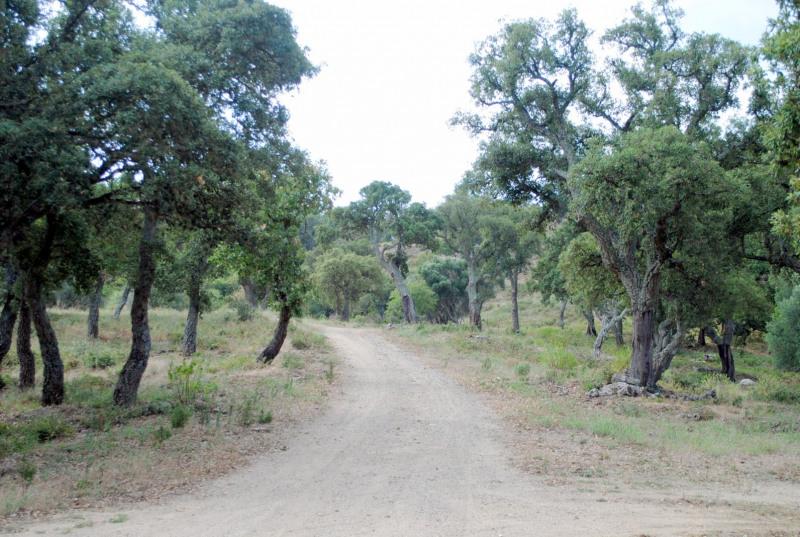 Vente terrain Bagnols-en-forêt 235000€ - Photo 11