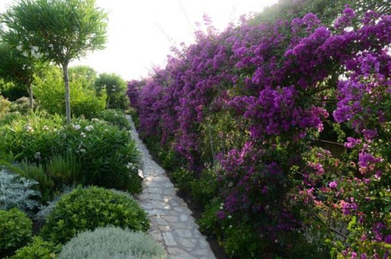 Vente de prestige maison / villa Corbara 2880000€ - Photo 17