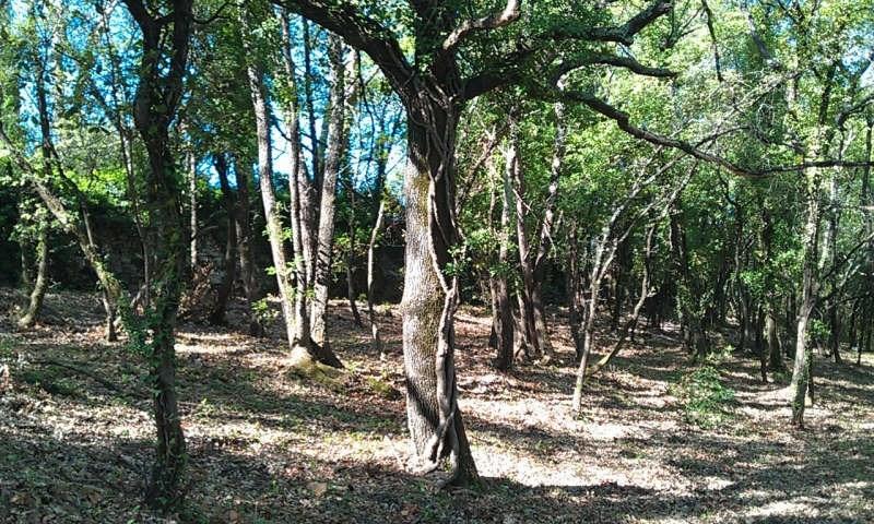 Vente terrain Brignoles 85000€ - Photo 3