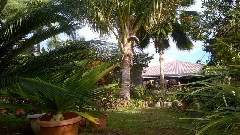 Sale house / villa La riviere 294 000€ - Picture 8