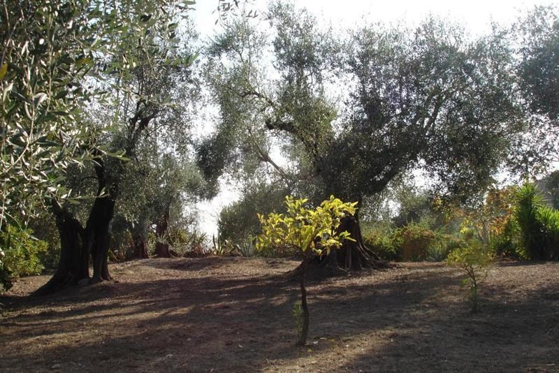 Vendita terreno L'abadie 318000€ - Fotografia 4