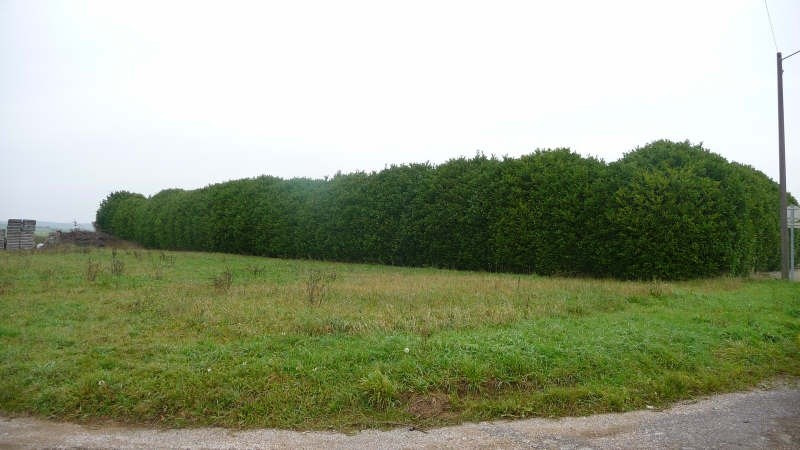 Vente terrain Esbarres 30 000€ - Photo 1