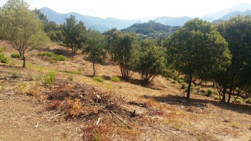Vente terrain Eccica-suarella 135000€ - Photo 4