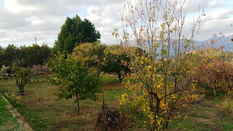Vente terrain Bastelicaccia 170000€ - Photo 7