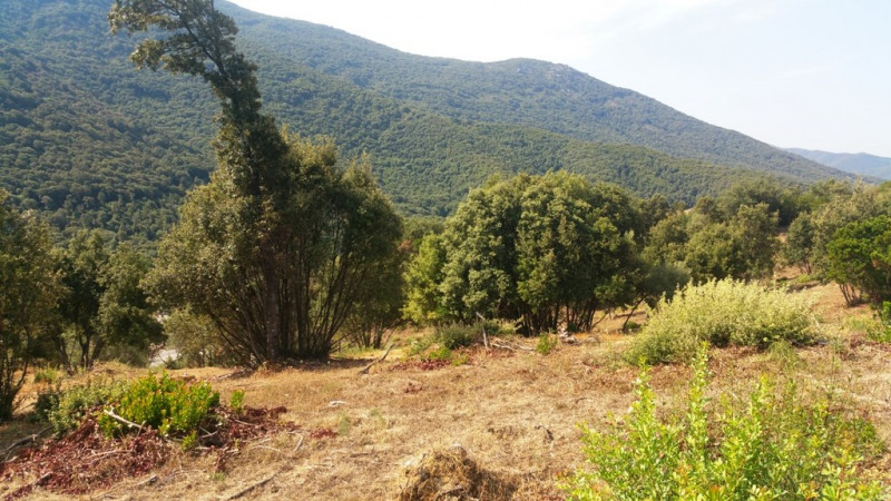 Vente terrain Eccica-suarella 180 000€ - Photo 5