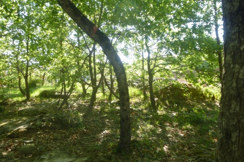 Vente terrain Vesseaux 84090€ - Photo 4