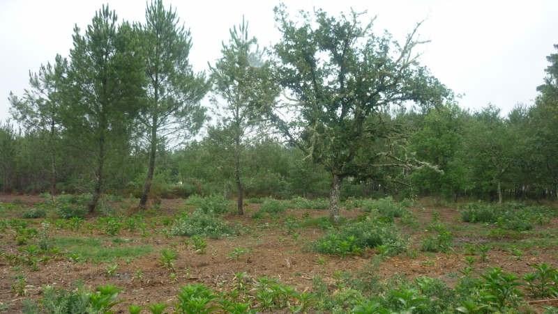 Vente terrain Pissos 86000€ - Photo 3