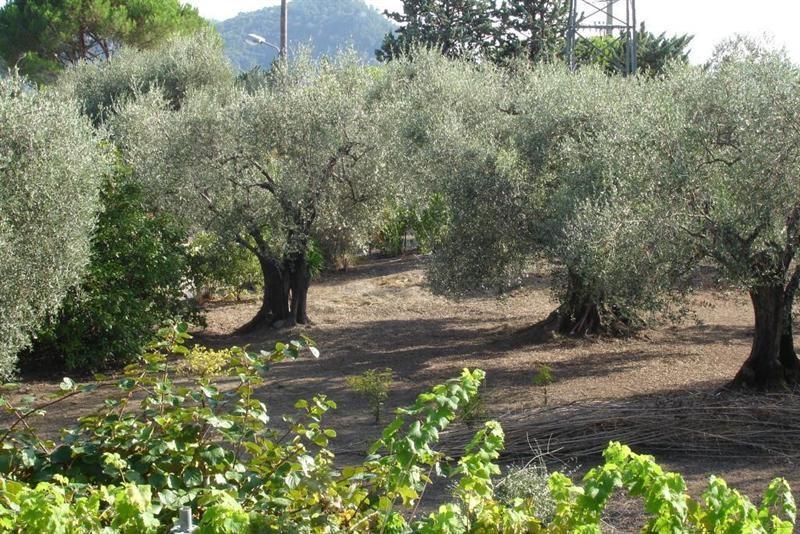 Vendita terreno L'abadie 318000€ - Fotografia 1