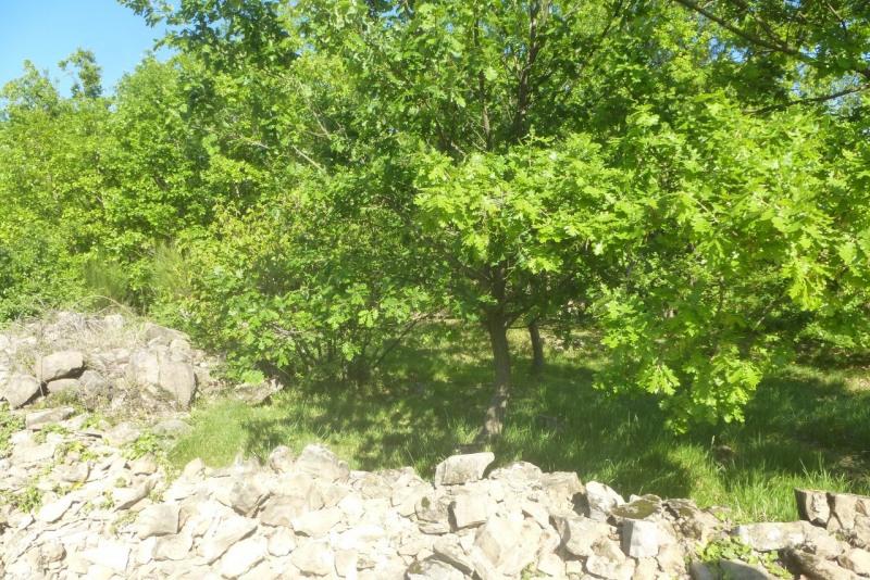 Vente terrain Vesseaux 84090€ - Photo 10