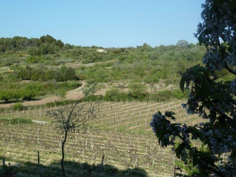 Revenda terreno Malemort du comtat 99000€ - Fotografia 2