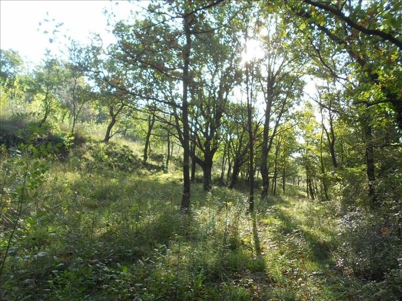 Vente terrain Lodeve 70000€ - Photo 1