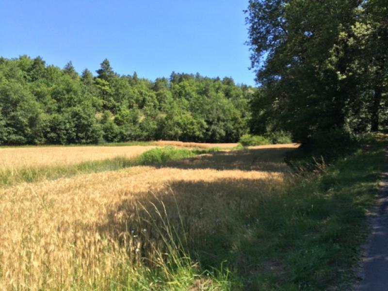 Vente terrain Saint-germain-de-belvès 97200€ - Photo 9