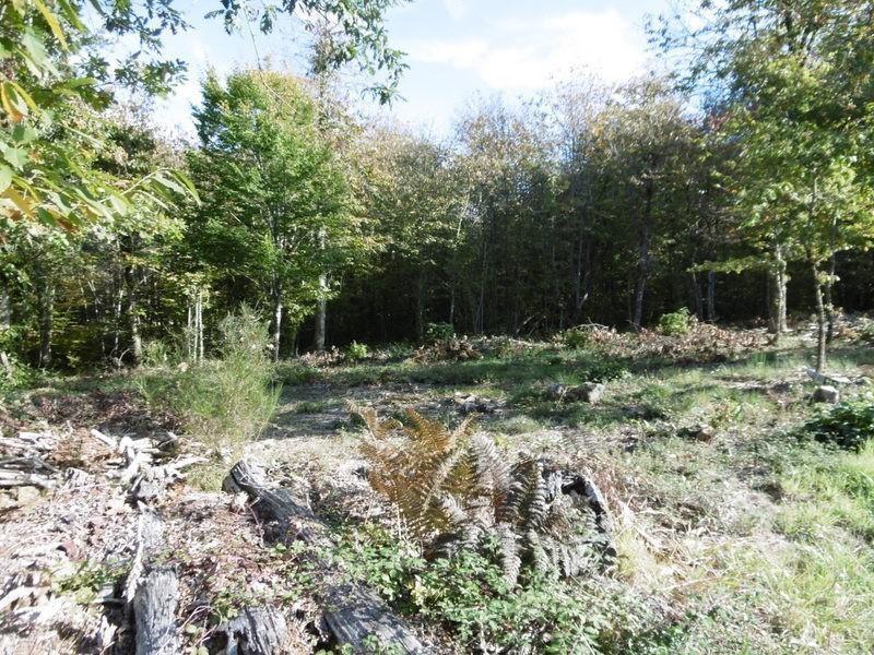 Vente terrain Douzillac 25000€ - Photo 1
