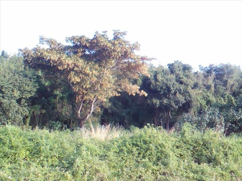 Vente terrain Ravine des cabris 92400€ - Photo 4