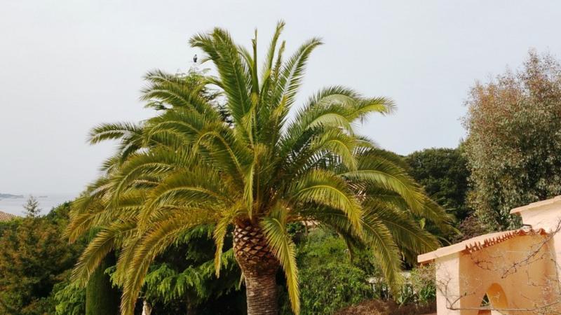 Sale house / villa Porticcio 840000€ - Picture 8