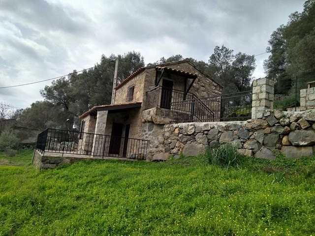 Dans une oliveraie de sept hectares. - Olmeto