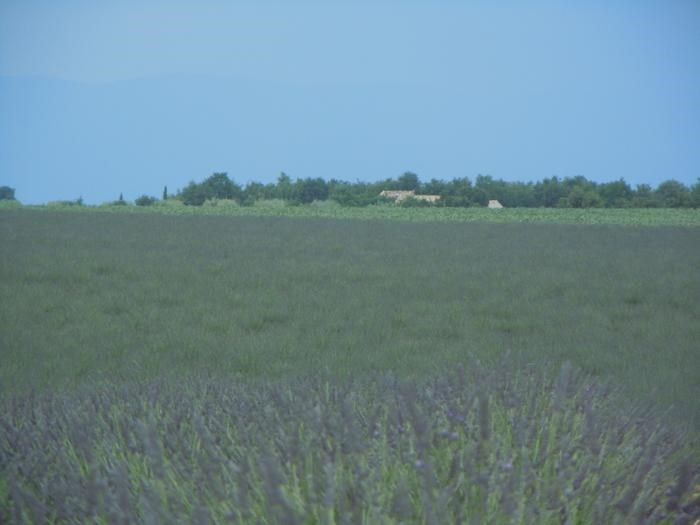 Holiday rentals Valensole - Apartment - 4 persons - BBQ - Photo N° 1