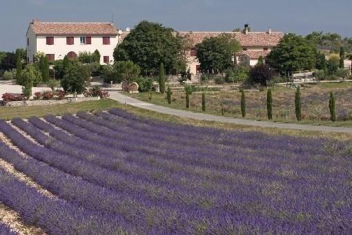 """gîtes de Molans, """"Grand Jas des lavandes"""" - Saint-Jurs"""