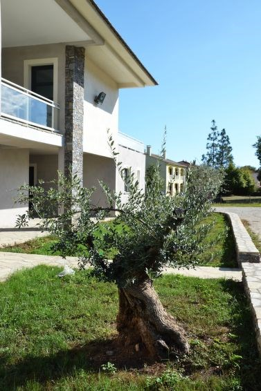 Location vacances San-Nicolao -  Appartement - 6 personnes -  - Photo N° 1