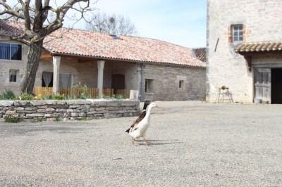 Casa rural de alquiler en Caylus - Caylus