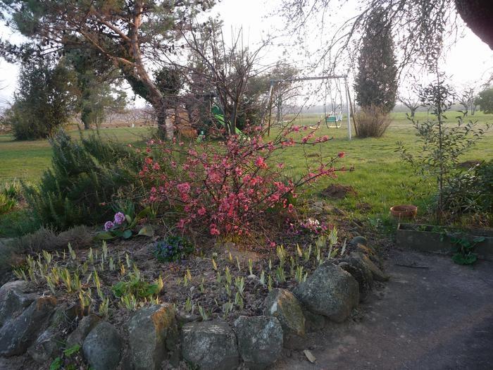 pelouse avec balancoire