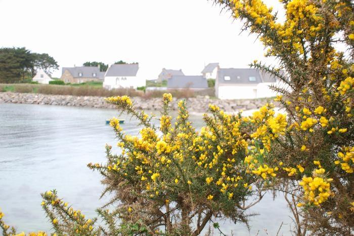 Derrière les genêts, la maison au bord de l'eau.