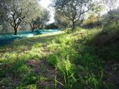 gite de charme dans les oliviers