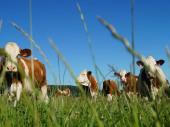 Une escapade à la campagne Gîte à la ferme