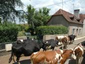 Jolie maison (3 épis3 étoiles) entre Béarn et Pays-basque  pour 2 à 4 personnes