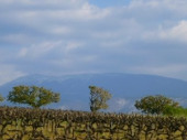 Authentique ferme en campagne vue sur le Ventoux