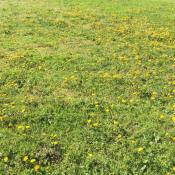 Terrain 654 m² Fareins (01480)