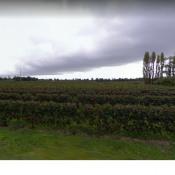 Terrain 1500 m² Saint Sulpice et Cameyrac (33450)