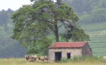 La BERGERIE gîte pour deux amoureux de la nature. Déconnection assurée...