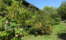 gite de caractère aux portes de Toulouse avec piscine et oasis nature location à la semaine et au mois