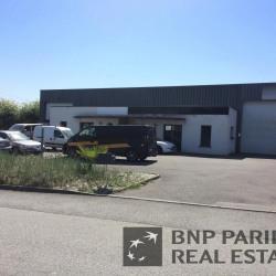Location Local d'activités Noyal-sur-Vilaine 250 m²