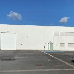 Location Local d'activités Fretin 990 m²