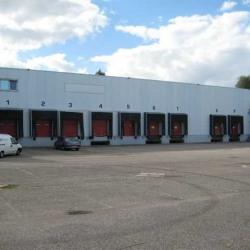 Vente Entrepôt Duppigheim 3248 m²