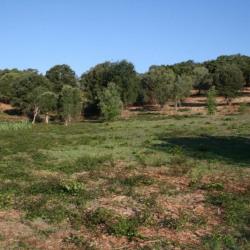 Vente Terrain Eccica-Suarella 1090 m²