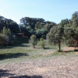 Vente Terrain Ajaccio 1000 m²