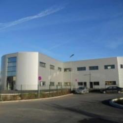 Location Bureau Pérols 300 m²