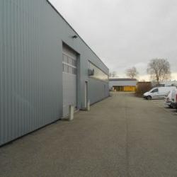 Location Local d'activités Hœnheim 800 m²