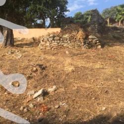 Vente Terrain Sainte Lucie de Porto Vecchi 700 m²